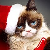 Aubrey Plaza to Voice Grumpy Cat in Lifetime Christmas Movie