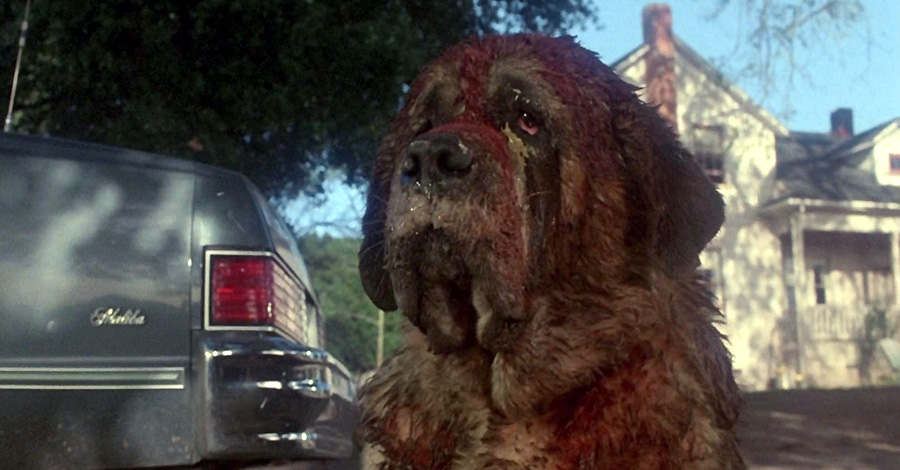 a plot synopsis of cujo If searched for a book by stephen king cujo a novel a sub-plot of cujo involves the young son tad being haunted by the ghost of cujo summary & study.